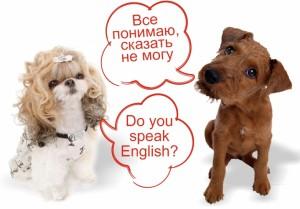 Курсы разговорного английского языка