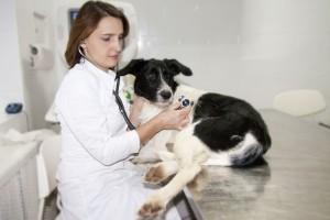 Профессия ветеринарный врач