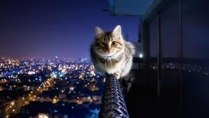 Типы электронных ошейников для котов